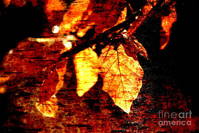 Leaf And Light Abstract Poster by Natalie Kinnear