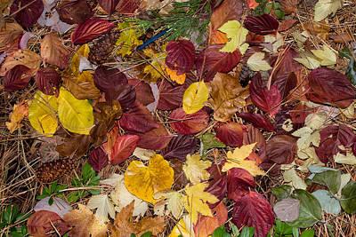 Leaf Confetti Poster