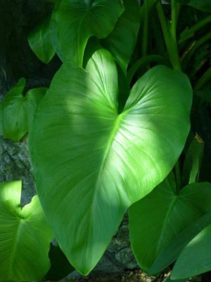 Leaf Heart Poster
