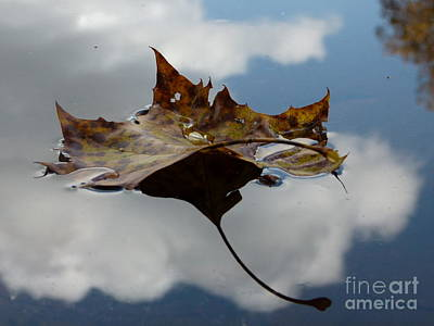 Leaf In Sky Poster by Jane Ford