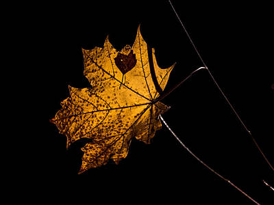 Poster featuring the photograph Leaf Leaf by Leif Sohlman