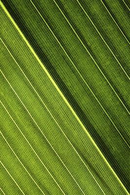 Leaf Lines I Poster