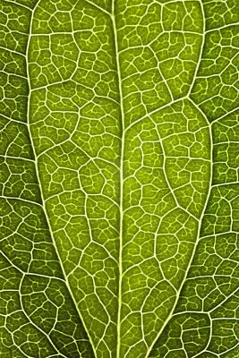 Leaf Lines V Poster by Natalie Kinnear
