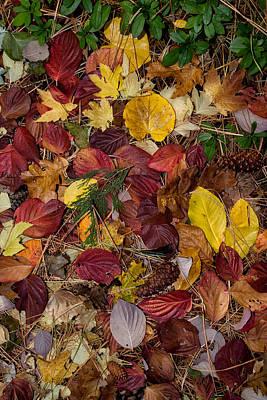 Leaf Litter Poster