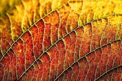 Poster featuring the photograph Leaf Rainbow by Crystal Hoeveler