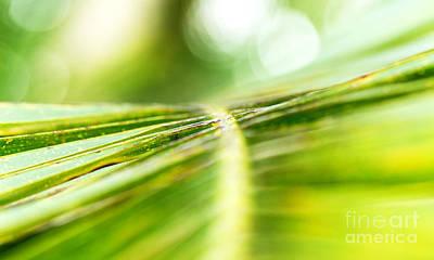 Leaf Shapes V Poster by Eyzen M Kim