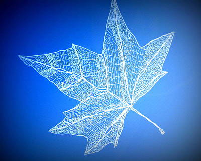 Leaf Study 3 Poster by Cathy Jacobs