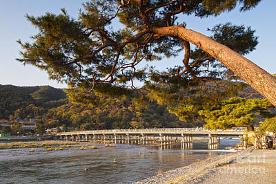 Leaning Pine Tree Arashiyama Kyoto Japan Poster by Colin and Linda McKie