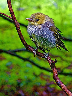 Least Flycatcher On Treat Farm Trail In Sleeping Bear Dunes National Lakeshore-michigan Poster by Ruth Hager