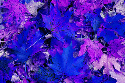 Leaves Poster by Aimee L Maher Photography and Art Visit ALMGallerydotcom