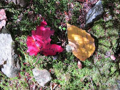 Leaves And Shadows Poster by Linda Marcille