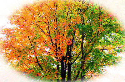 Leaves Changing Colors Poster by Cynthia Guinn