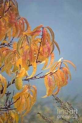 Leaves In Fog Poster