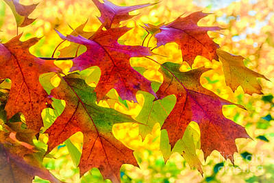 Leaves Poster by Janis Knight