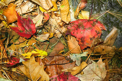 Leaves Of The Fall Great Smoky Mountains Painted  Poster