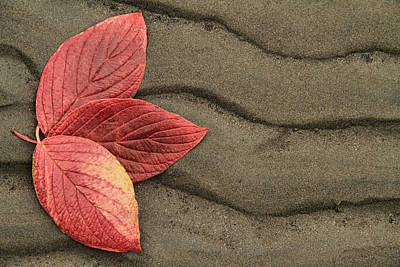 Leaves On Sand Poster by Brent Davis