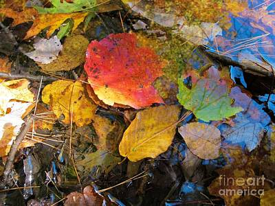 Leaves On Water Poster by Linda Marcille