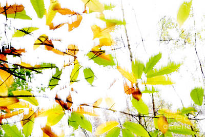 Leaves Splash Abstract 2 Poster by Natalie Kinnear