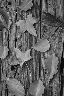 Leaves Still Life Poster by Garry Gay