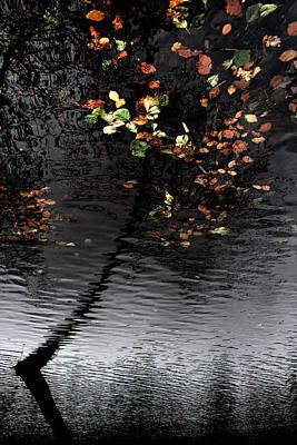 Leaves Unfallen Poster by Daniel Zrno