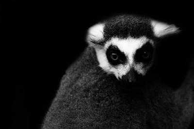 Lemur Poster by Martin Newman