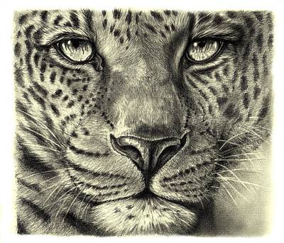 Leopard Poster by Heidi Kriel