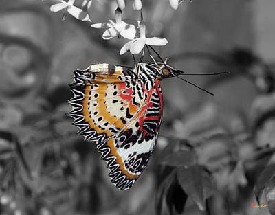 Leopard Lacewing Butterfly Dthu619bw Poster by Gerry Gantt