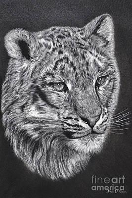 Adams Leopard - Pastel Poster