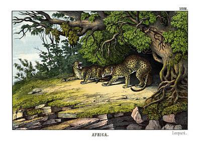 Leopard Poster by Splendid Art Prints
