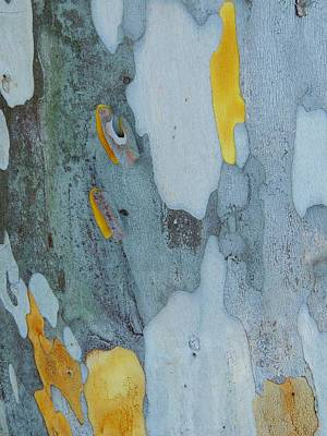 Leopard Tree Bark Abstract No 1 Poster