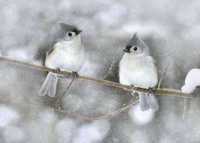 Let It Snow Poster by Lori Deiter