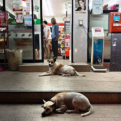 Poster featuring the photograph Let Sleeping Dogs Lie Where They May by Mr Photojimsf
