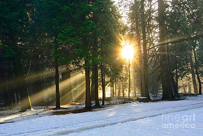 Let There Be Light - Sun Beams Pouring Through A Forest Scene. Poster