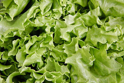 Lettuce Leaves Poster by Tom Gowanlock