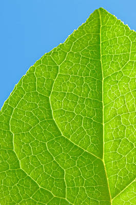 Life Of A Leaf Poster by Joan Herwig