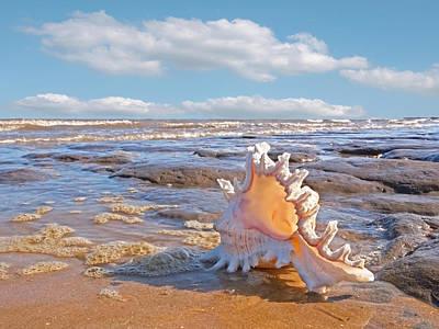 Life's A Beach - Murex Ramosus Seashell Poster