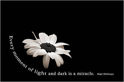 Light And Dark Inspirational Poster by Bill Pevlor