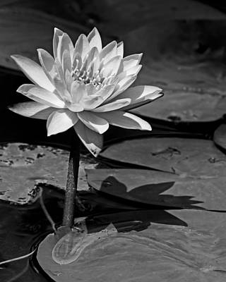 Light And Shadow Poster by Dawn Currie
