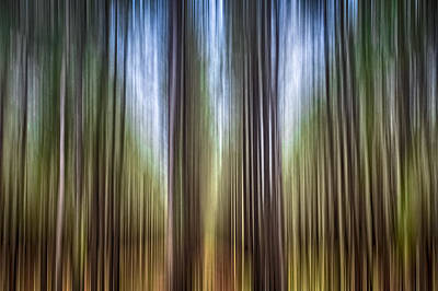 Light In The Forest Poster by Carolyn Marshall