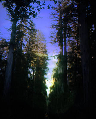 Poster featuring the digital art Light Through The Forest by Cathy Anderson