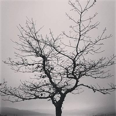 Lightness Tree Poster by Jose Barbosa
