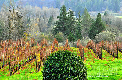 Poster featuring the photograph Li'l Vineyard by Tonia Noelle