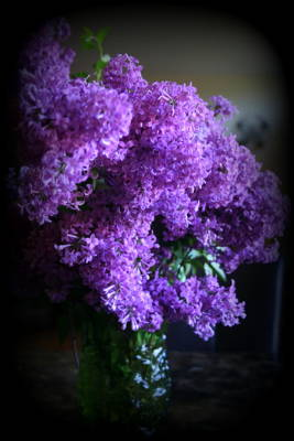 Lilac Bouquet Poster by Kay Novy