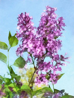 Lilacs Against The Sky Poster