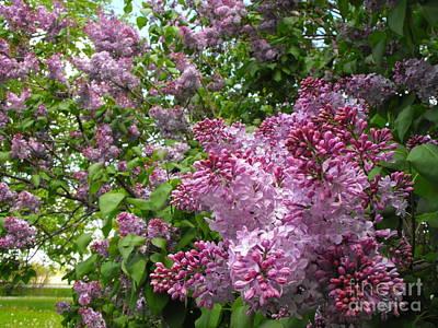 Lilacs Poster by Erick Schmidt