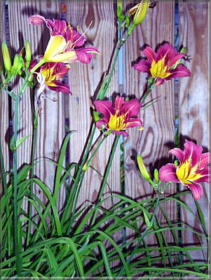 Lilies Against The Wooden Fence Poster