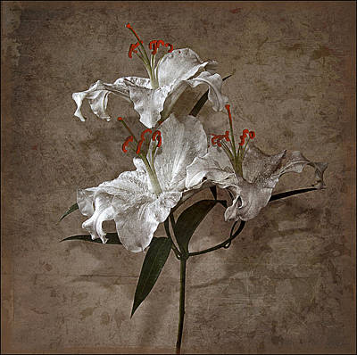 Poster featuring the photograph Lilium Euratum #01 by Richard Wiggins