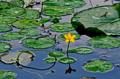 Lilly Pad Pond Poster by Frozen in Time Fine Art Photography