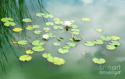 Poster featuring the photograph Lilly Pads by Erika Weber