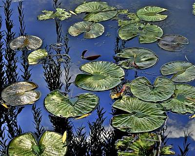 Lilly Pond Poster by Frozen in Time Fine Art Photography